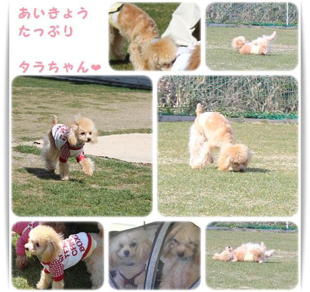 3cats_20130303194443.jpg