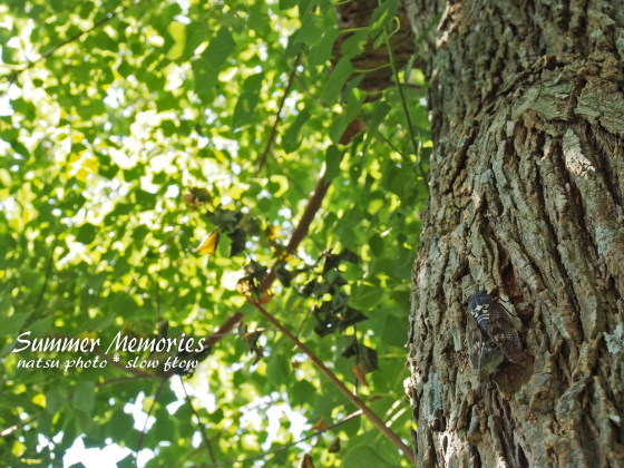 2012natsuphoto05