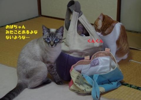 023五月ちゃん20140111