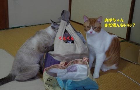 024五月ちゃん20140111