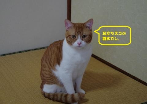 059雛太くん20140111