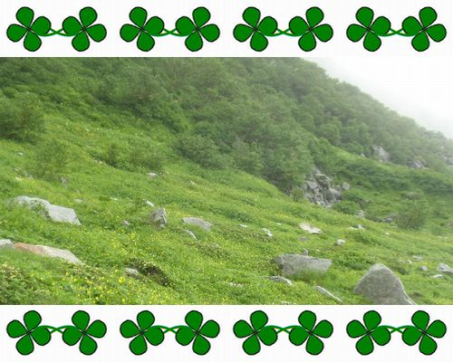 駒ヶ岳クローb-