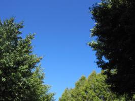 青い空、緑の樹