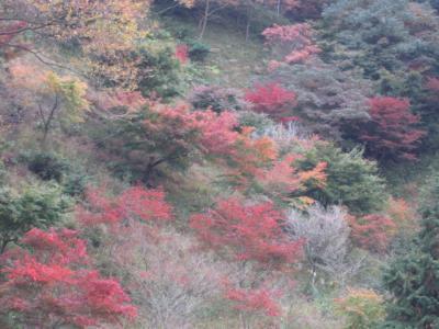 七沢、斜面の紅葉