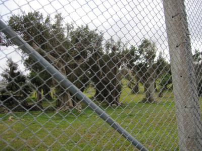基地内の目隠しの樹木