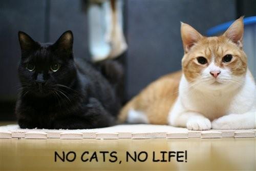 No cats, No life! 2013