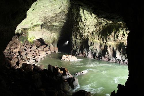 アシカの洞窟
