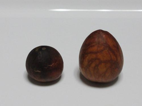 アボカド01