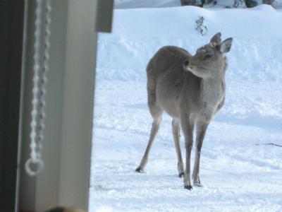 わが家が好きな鹿