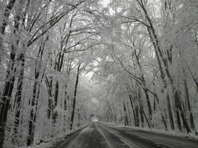 12月5日、樹氷の芸術