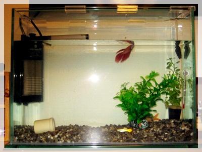 IMG_5286熱帯魚