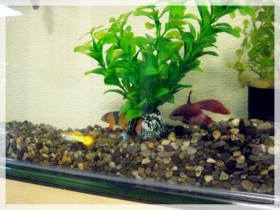 IMG_5296熱帯魚