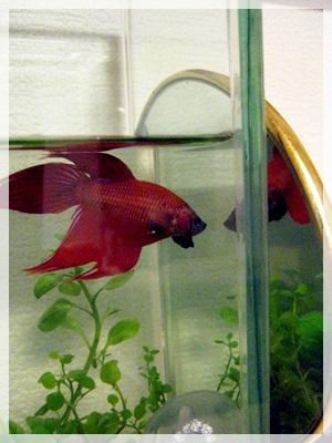 IMG_5329熱帯魚