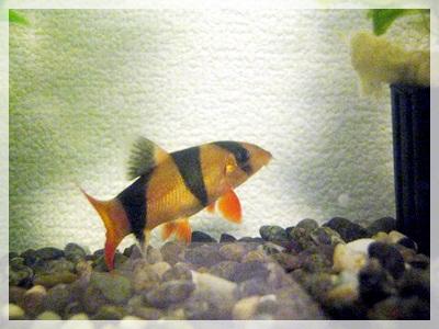 IMG_5342熱帯魚