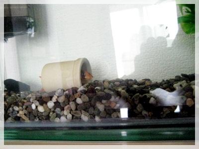 IMG_5353熱帯魚