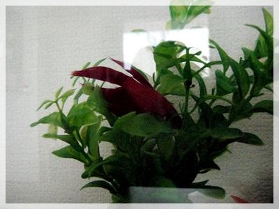 IMG_5358熱帯魚