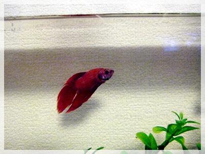 IMG_5288熱帯魚