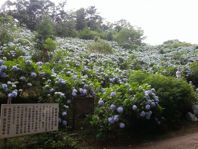 20120715麻綿原高原 (12)