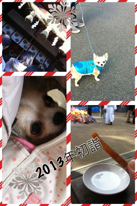 IMG_8694[1]