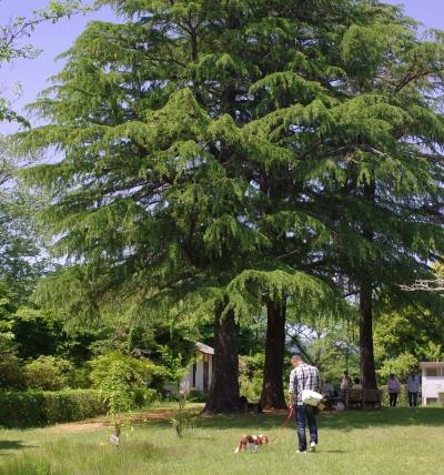 5_512モミの木