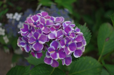 9_617紫