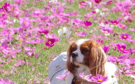 1020_9花畑の中