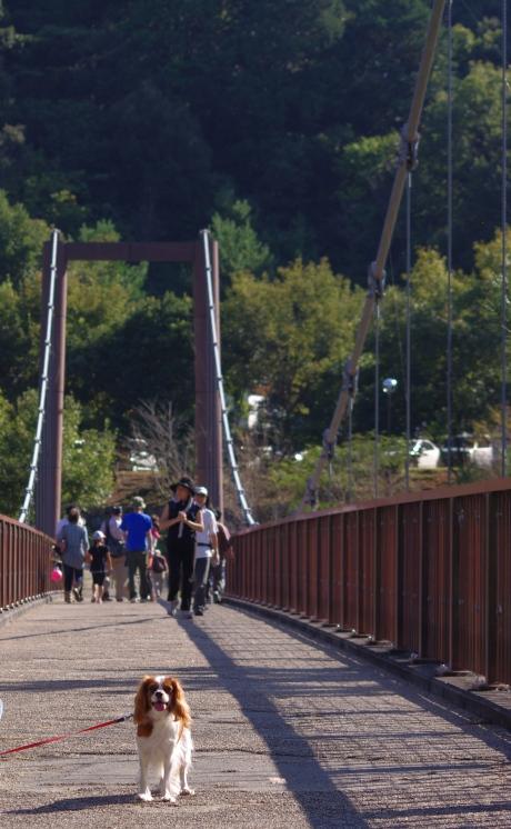 1021_12吊り橋の上