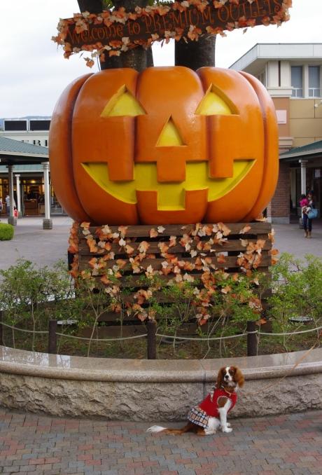 2かぼちゃの前で