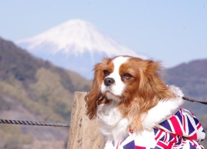 224_6富士山とLatte
