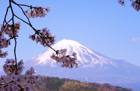 322_2桜と富士