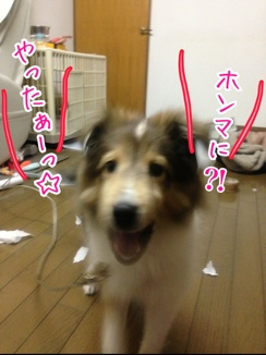 fc2blog_201401271924460f7.jpg