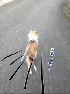 fc2blog_2014012719255205a.jpg