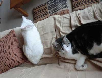2012_0715_130923-CIMG4860猫たちトリミング