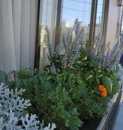 窓辺の花②