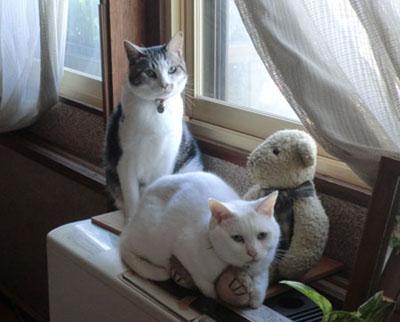 2012-11-02ヒーター上の猫たち