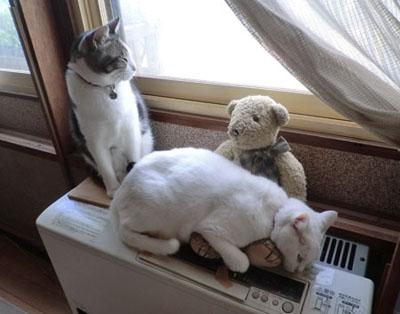 2012-11-02ヒーター上の猫たち③