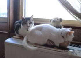 2012-11-02ヒーター上の猫たち⑤pg