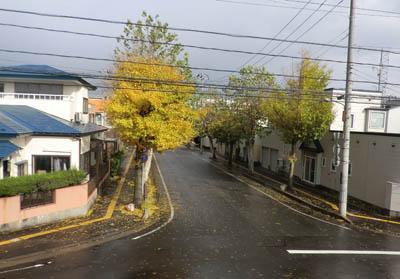2012-12-08うちの前の景色
