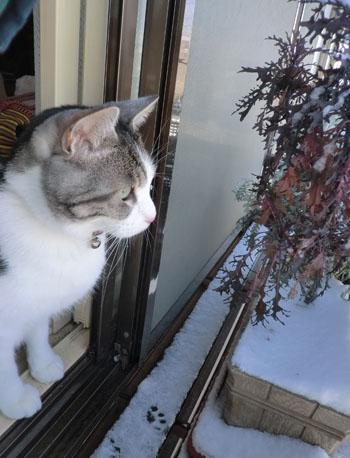 2012-12-24雪景色とみちる⑥