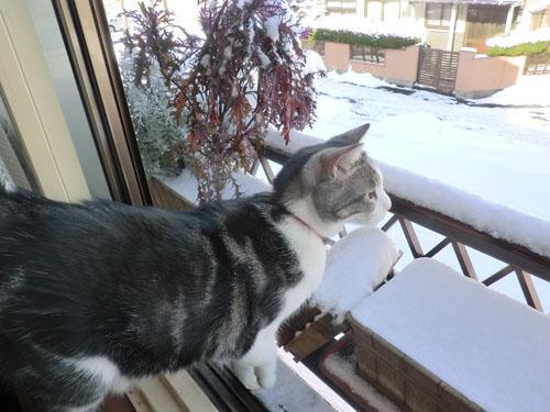 2012-12-24雪景色とみちる②