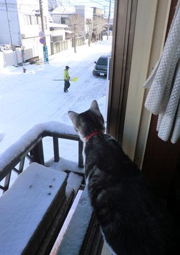2012-12-24雪景色とみちる⑤