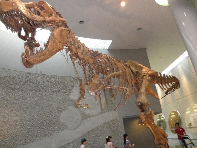 レプリカもあるけど ホントの恐竜の化石もあるよっ