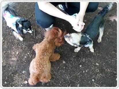 20120430_dogcafe2.jpg