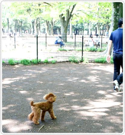 20120430_dogcafe3.jpg