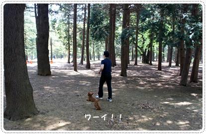 20120430_dogcafe4.jpg