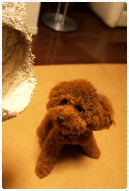 20120511_slippers1.jpg