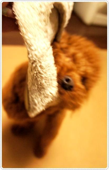 20120511_slippers2.jpg