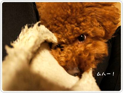 20120511_slippers3.jpg