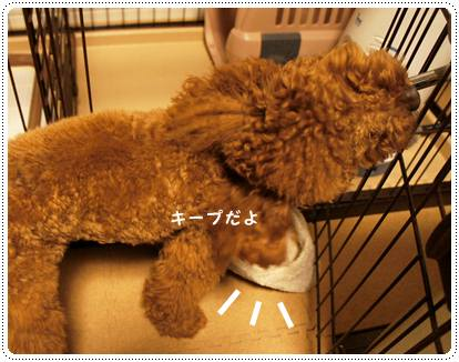 20120511_slippers4.jpg