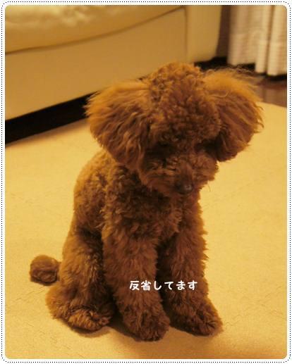 20120516_seoul3.jpg